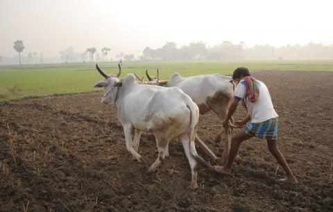 Agricultural Scenario In India