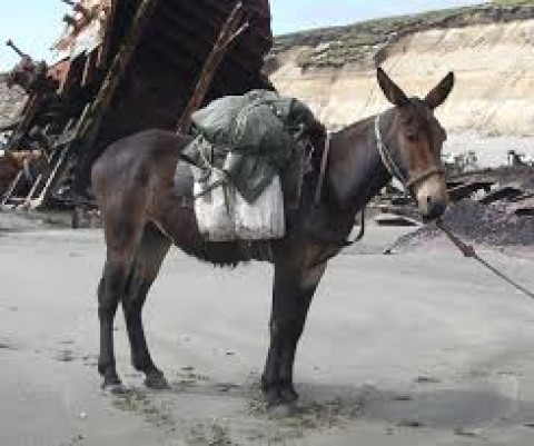 Mule Kicked